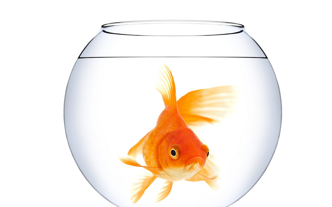 How to Get Your Client Noticed While Swimming in the Fish Bowl